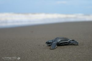 Baby turtles keep coming!-1