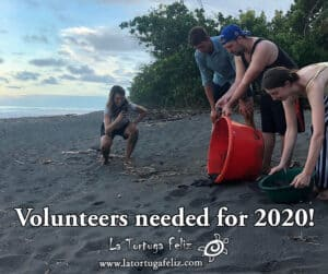 Looking for volunteers who want to join turtle program.